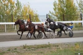 29 Сентября 2018 Состоится 35 день испытаний лошадей рысистых и верховых пород